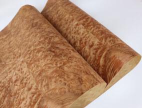 Paper back Golden Burl Veneer sheet